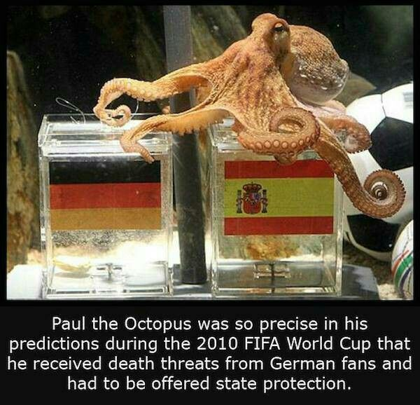 Paul The Octopus Bizarre Facts Paul The Octopus Fun Facts
