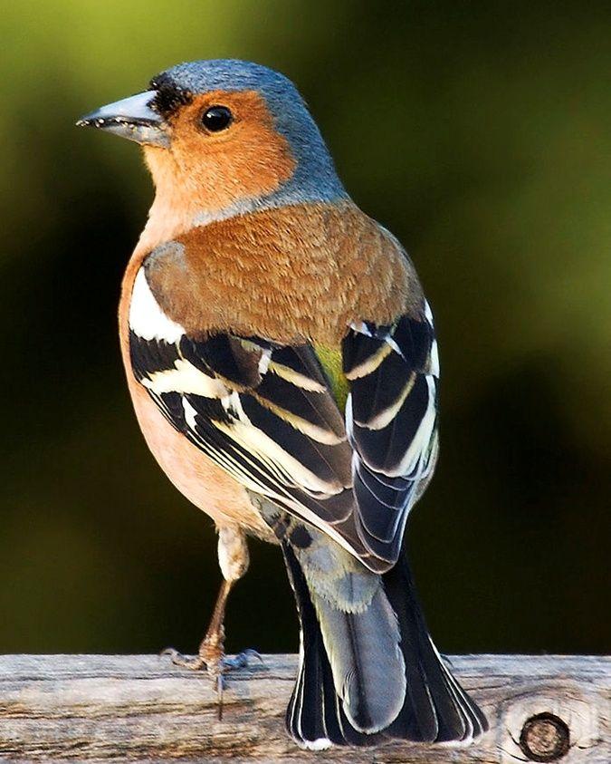 Секреты городских птиц: кто и как поет у нас под окнами - KP.UA
