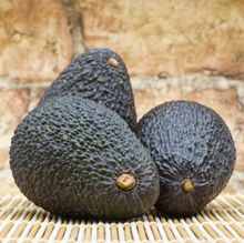 Cold Hardy, Delicious Avocados Without the Wait