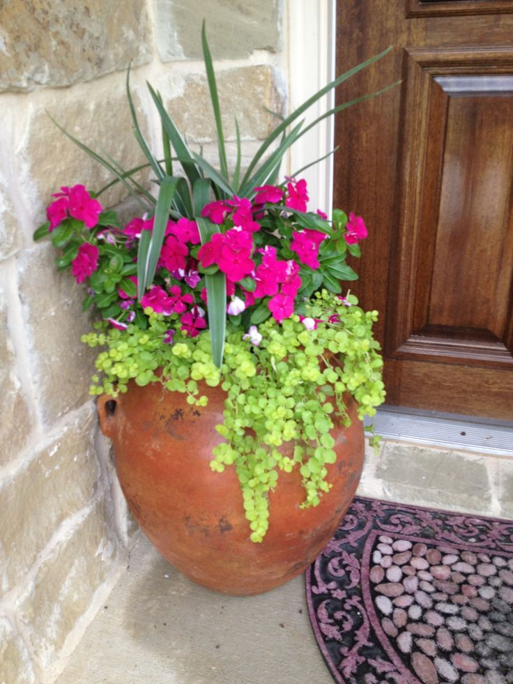 Flax Lily, Cora Vinca, And Lysmachia/ Creeping Jenny In Mexico Pot. Great