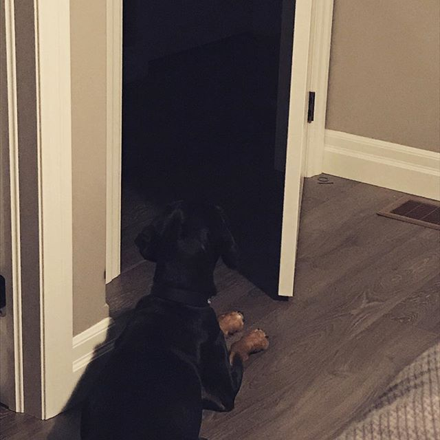 Home alone and Taz is on guard as a run some numbers and plan my big business plans for 2018! #dobermancockerspaniel #cockerspanieldoberman #guarddog #homealone #securitysystemison #dogsofinstagram #business #planning #businessplanning