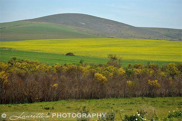 Yellow - Photograph