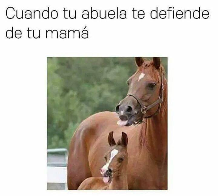 Te quiero abuelita!! #memes #chistes #chistesmalos #imagenesgraciosas #humor http://www.megamemeces.com/memeces/imagenes-de-humor-vs-videos-divertidos