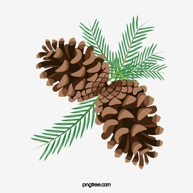 شجرة الصنوبر فروع التوظيف كرتون Png وملف Psd للتحميل مجانا Pine Cones Drawing For Kids Tree Branches