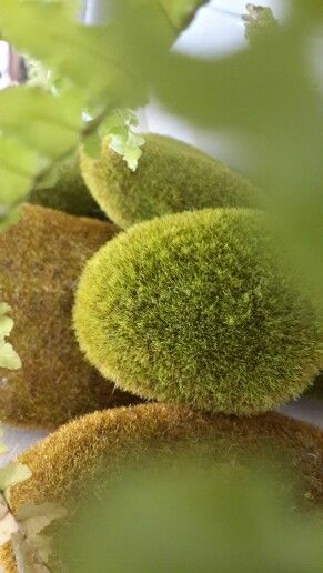 """""""Moss"""" stones"""