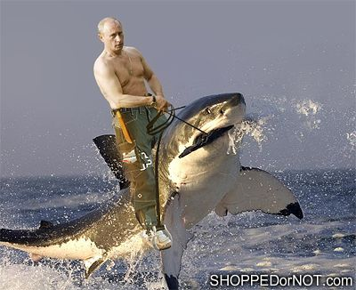 'Jaws'-Dropping Shark Memes Circling the Web