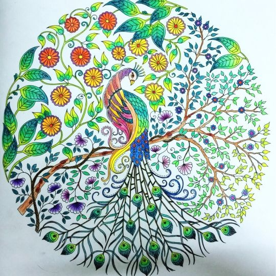 Johanna Basford | Picture by Hayley Ma | Colouring Gallery