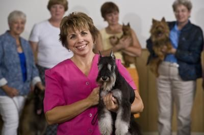 """The famous """"Barky Von Schnauzer"""" commercial is a favorite among schnauzer owners for good reason. Schnauzers are genetically geared to bark. Although you can't stop your schnauzer from barking completely, you can train him to bark when appropriate and stop when asked."""