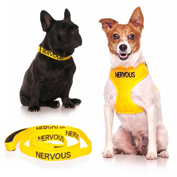 10% off small yellow NERVOUS combo sets plus FREE SHIPPING within Australia. Model: French Bulldog & Jack Russell