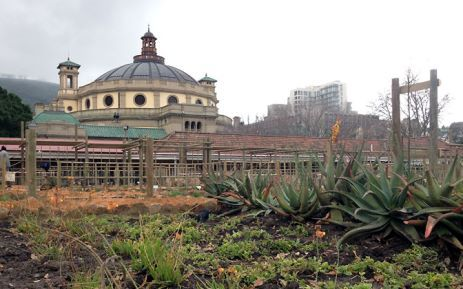 The new Dutch-period vegetable garden was unveiled at the Company's Garden in Cape Town in June 2014. Picture: EWN