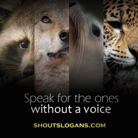 Wildlife Conservation Slogans and Sayings