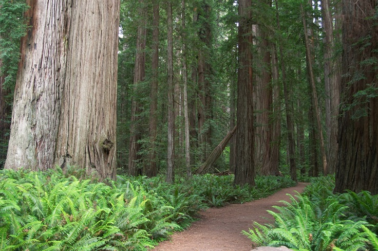 Redwood Hiking Trail at Jedediah Smith State Park CA