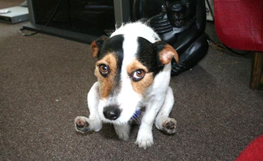 103 Best Pet Health Central Blog Images On Pinterest Pet