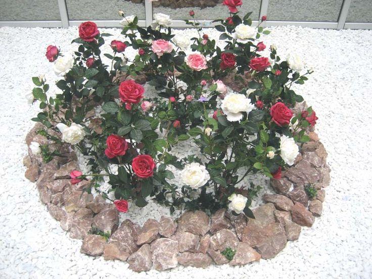 Клумбы из роз - Варианты размещения роз в саду
