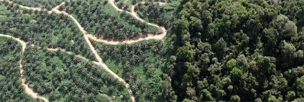 Plano de Ação para a Silvicultura Tropical +30: a FAO e o Banco ...