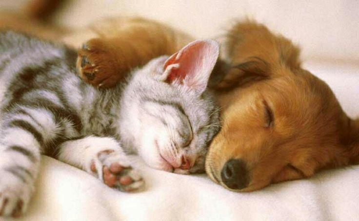 Animais de estimação muito fofinhos !!!