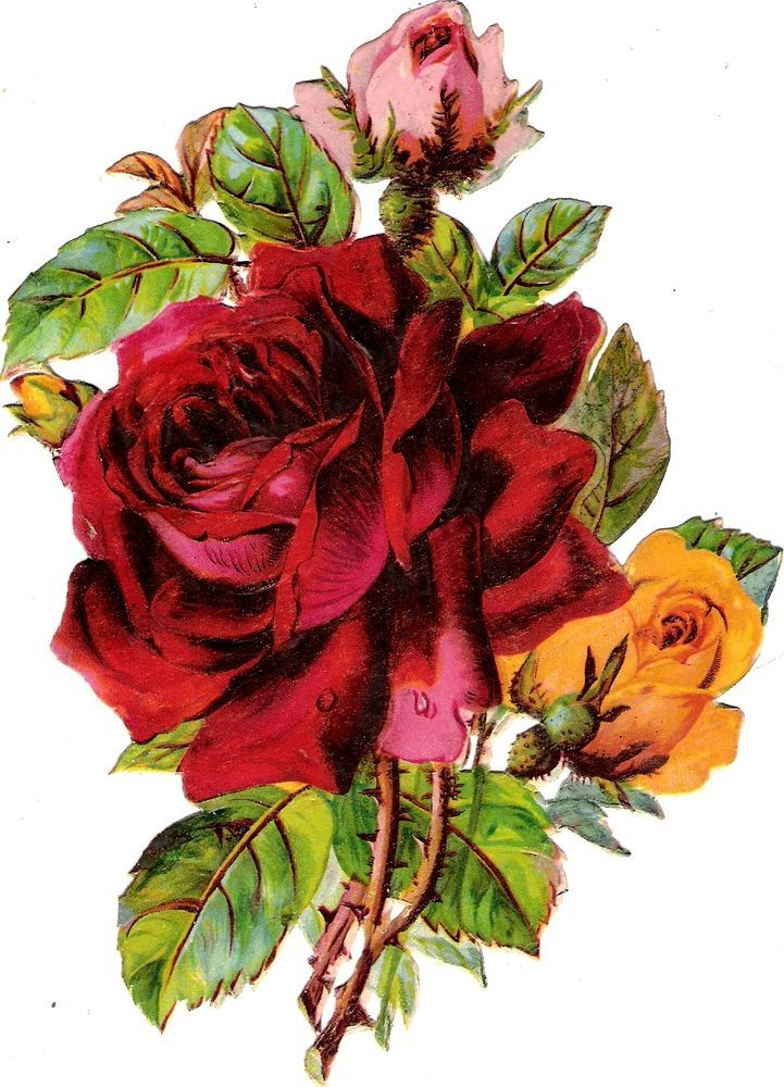 Oblaten Glanzbild scrap die cut  chromo Rose  16 cm  Blume flower