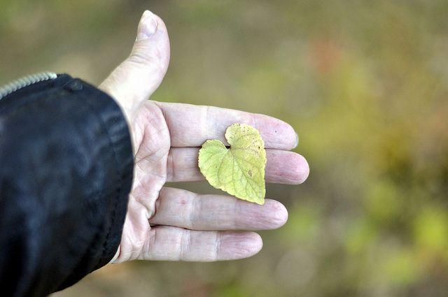 Skogspromenad  http://www.loveandrespect.se