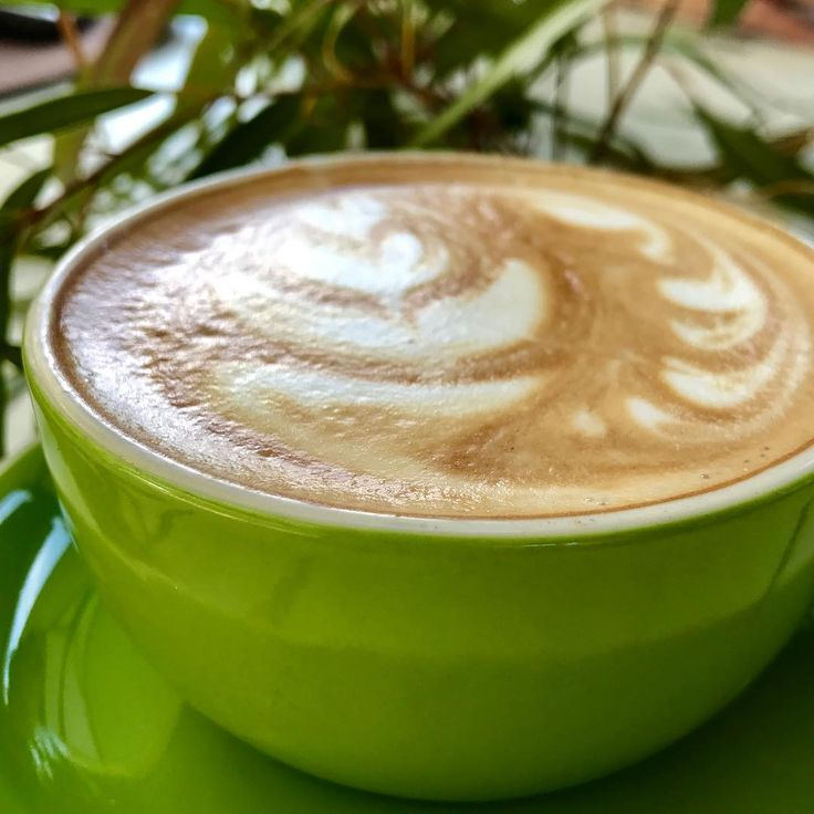 Green Day #coffee #flatwhite #walking #summerishere #daysoff #green #leaves #flyswat  #nature #zamia #cafe #kingspark