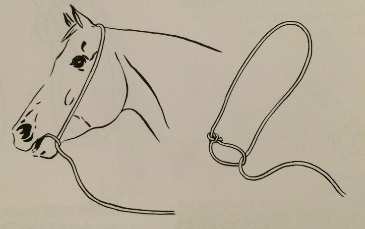 Here is another way to make emergency reins; also called a war bridle.