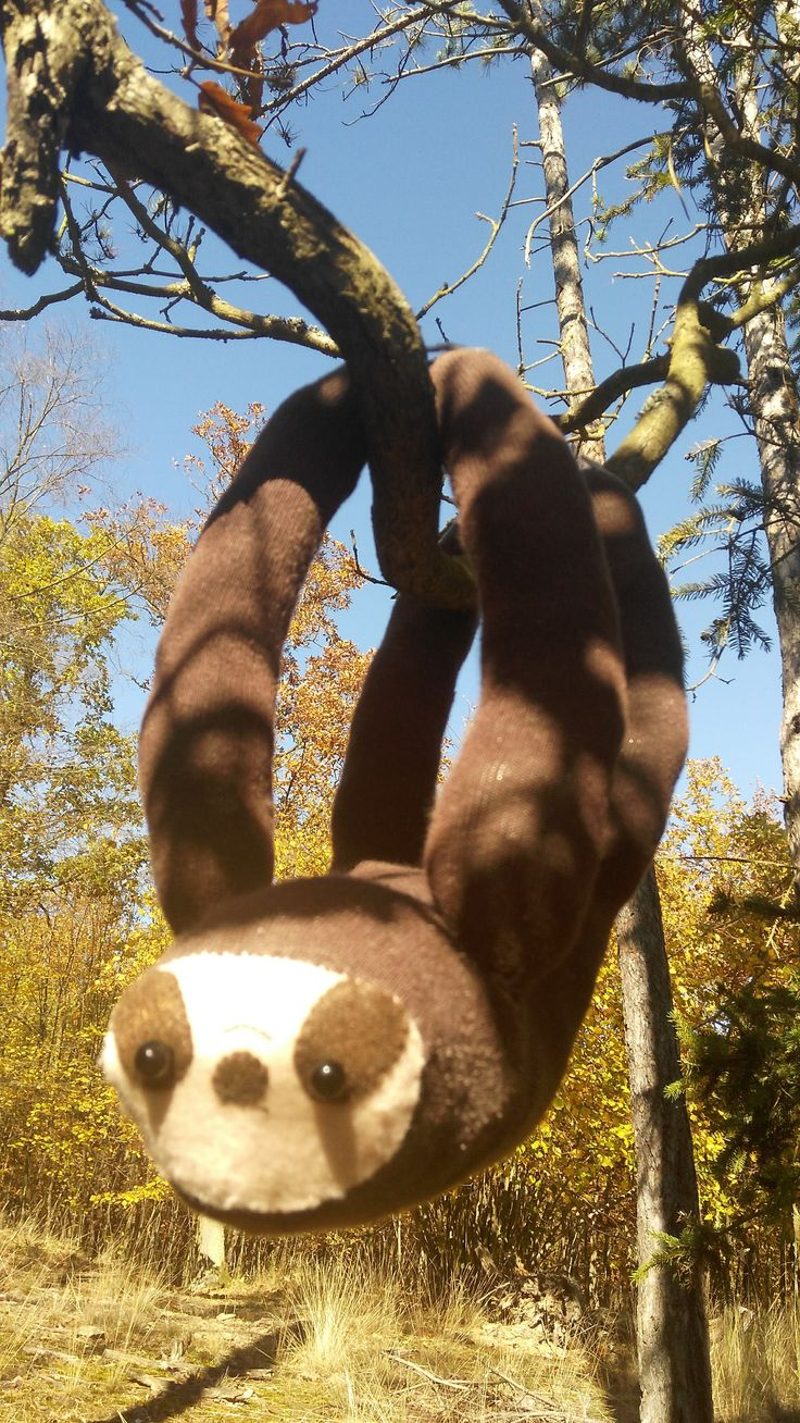 Sloth in the forest :)
