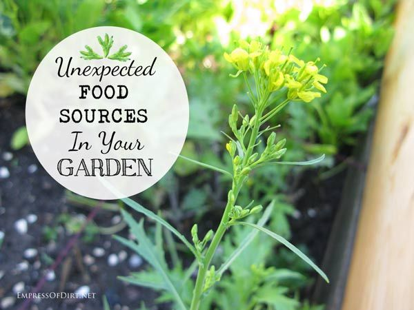 Unexpected Food Sources In Your Garden - find out what you could be eating - delicious ideas!