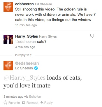 ed i love you: I Love Cats,  Internet Site, Evil Cats,  Website, Web Site, Cats Es, Harry Styles, Boys 3, Direction 3