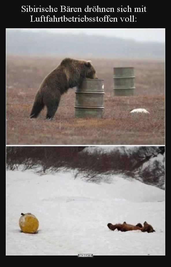 Sibirische Bären dröhnen sich mit Luftfahrtbetriebsstoffen
