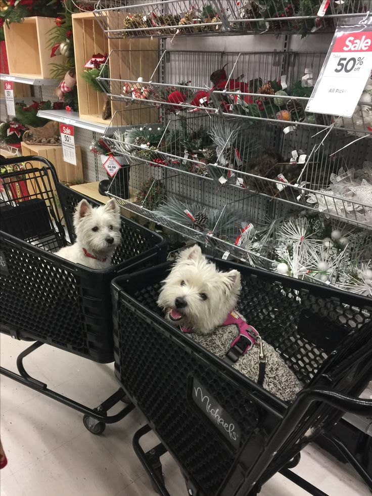 Rukus & Molly getting ready for the holidays at Michaels #michaelsstores #westiesloveshopping