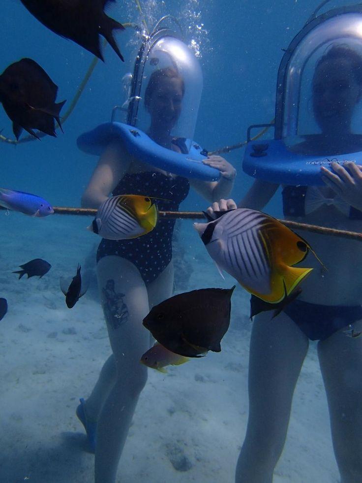 Oceanwalker Tour (Port Vila, Vanuatu): Hours, Address, Attraction Reviews - TripAdvisor