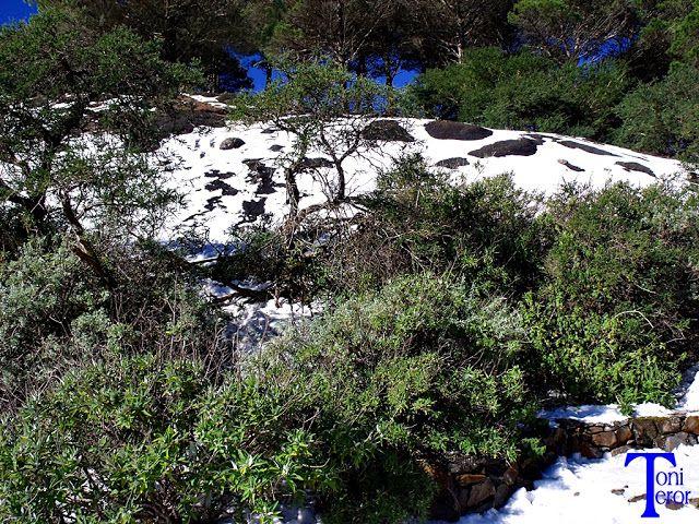 El reflejo de mi mirada: Arbustos y nieve