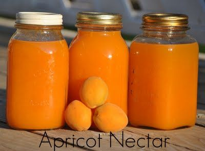 Canning Apricot Nectar…if you have never had homemade apricot nectar, you should!  It is so good!
