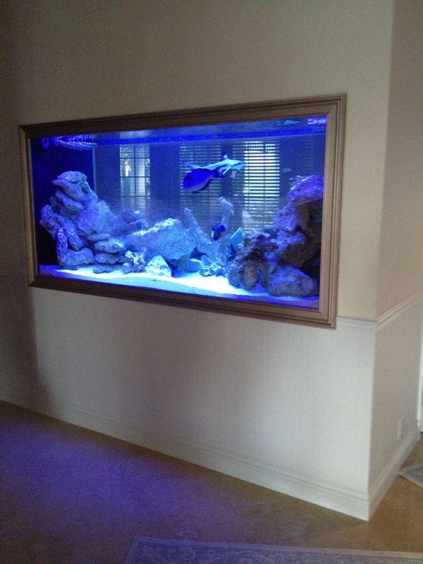 home shark tank   Displaying (20) Gallery Images For Home Shark Tank Aquarium...