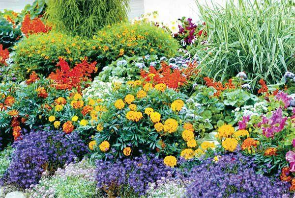 Какие особенности следует учитывать при создании клумб непрерывного цветения? Наиболее популярные разновидности растений, применяемые для формирования таких клумб + много полезных схем и примеров.