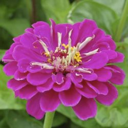 Starten met een pluktuin: 10 must-have planten door Ingeborg D'hoker | MijnTuin.org