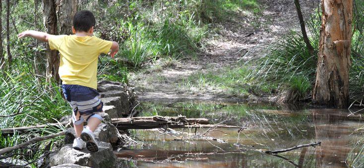 Venman Bushland Stepping Stones 2