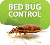 http://www.imagepestcontrol.com/en/bed_bugs.php