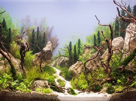 Pimp my fish tank: This is the eerie, beautiful world of aquascaping - CNN.com