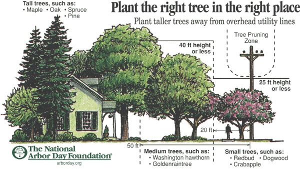 Great Gardens | Choosing the Right Tree Can Add Value to Your Home and Cut Energy Bills.