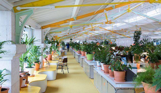 PLANTS! beautful greenery - commercial office dream