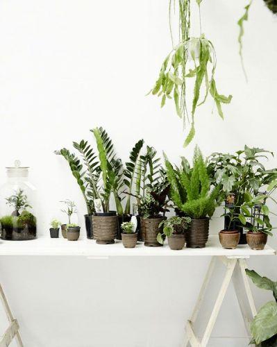 jardin dhiver,plantes hivernales,plantes,hiver,automne,créer un ...