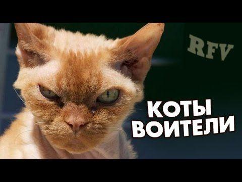 Самые смешные кошки #15 ∙ Приколы с животными 2015 ∙ Best Funny Cats Com...