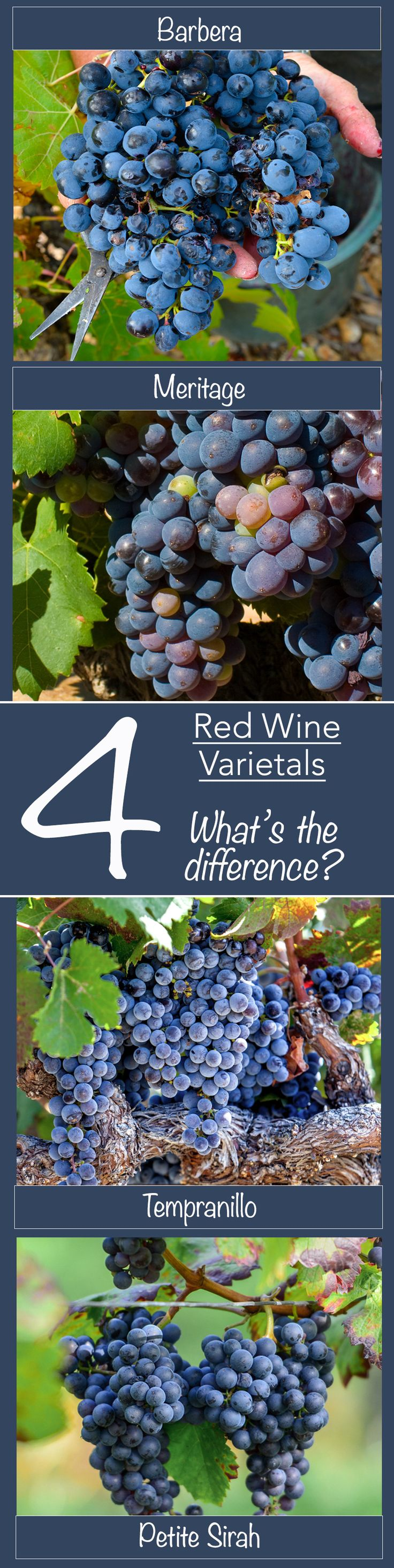 Do you know the difference? | Red Wine | Wine | Gold Medal Wine Club | Wine Varietals | Barbera | Meritage | Tempranillo | Petite Sirah |