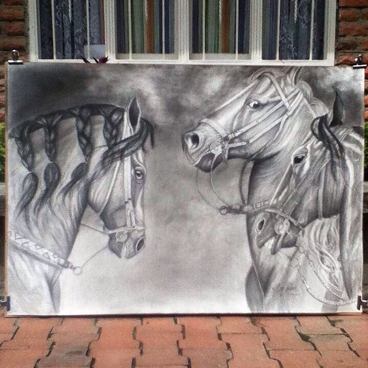 Horses caballos