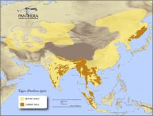 A Tiger range map which illustrates historically where tigers have roamed and where they now habituate. The dramatic reduction in Tiger habitat is largely due to the spread of human population and the poaching of tigers for their skins and body parts.