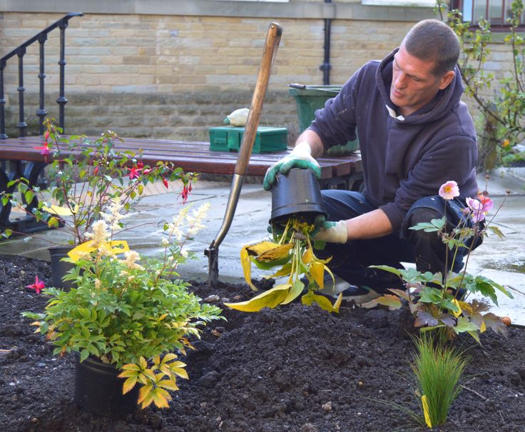 Planting out ready for Autumn.