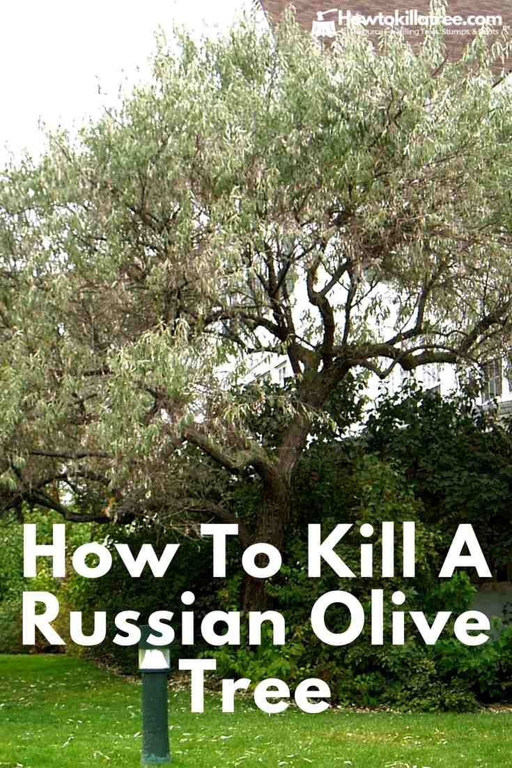 Pin On How To Kill A Tree By Tree Type
