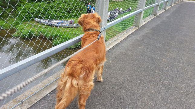 Fluks, den nysgerrige hund