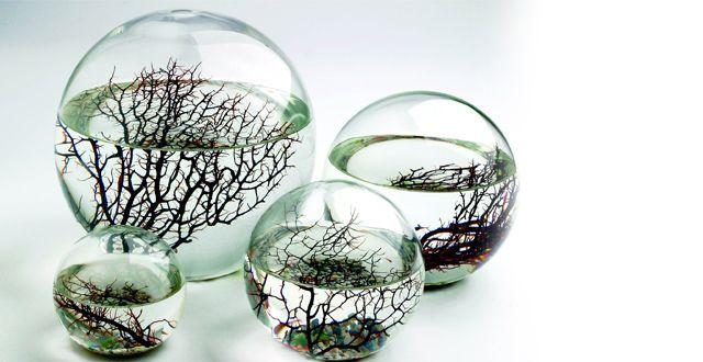 Kunstenaar: onbekend, ik heb een aantal foto's gevonden op een blog waar geen naam werd vermeld. In deze glazen bollen bevinden zich kleine ecosystemen, zonder zuurstof of voedsel kunnen deze planten overleven. Dit is een tweede natuur omdat het ingaat tegen wat wij denken wat planten allemaal nodig hebben om te leven.
