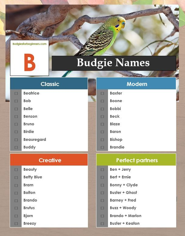 29+ C names for birds ideas
